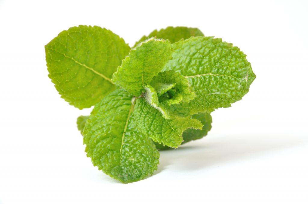 liście mięty - olejek miętowy